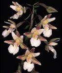 Read more: Epipactis palustris